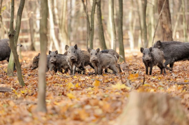 Langhe abitanti bosco