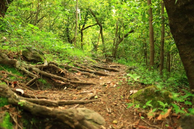 bosco Alta Langa